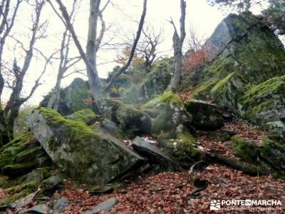 Hayedo Tejera Negra - Fiesta Almudena; senderismo nivel alto hiking free gratis senderismo